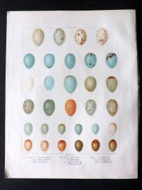 Frohawk 1898 Antique Bird Egg Print. Thrush, Wheater, Ring Ouzel, Robin Redbreast, Nightingale
